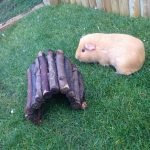 Del The Guinea Pig
