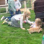 Fairbrother Farm On Channel 5 Milkshake Pets